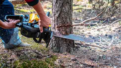 10 Simple Steps on How to Cut Down a Small Tree with a Saw