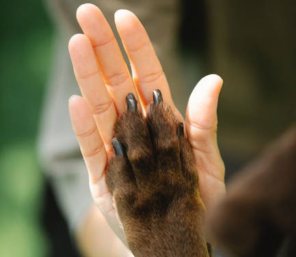 10 Tips for Pet Friendly Pest Control